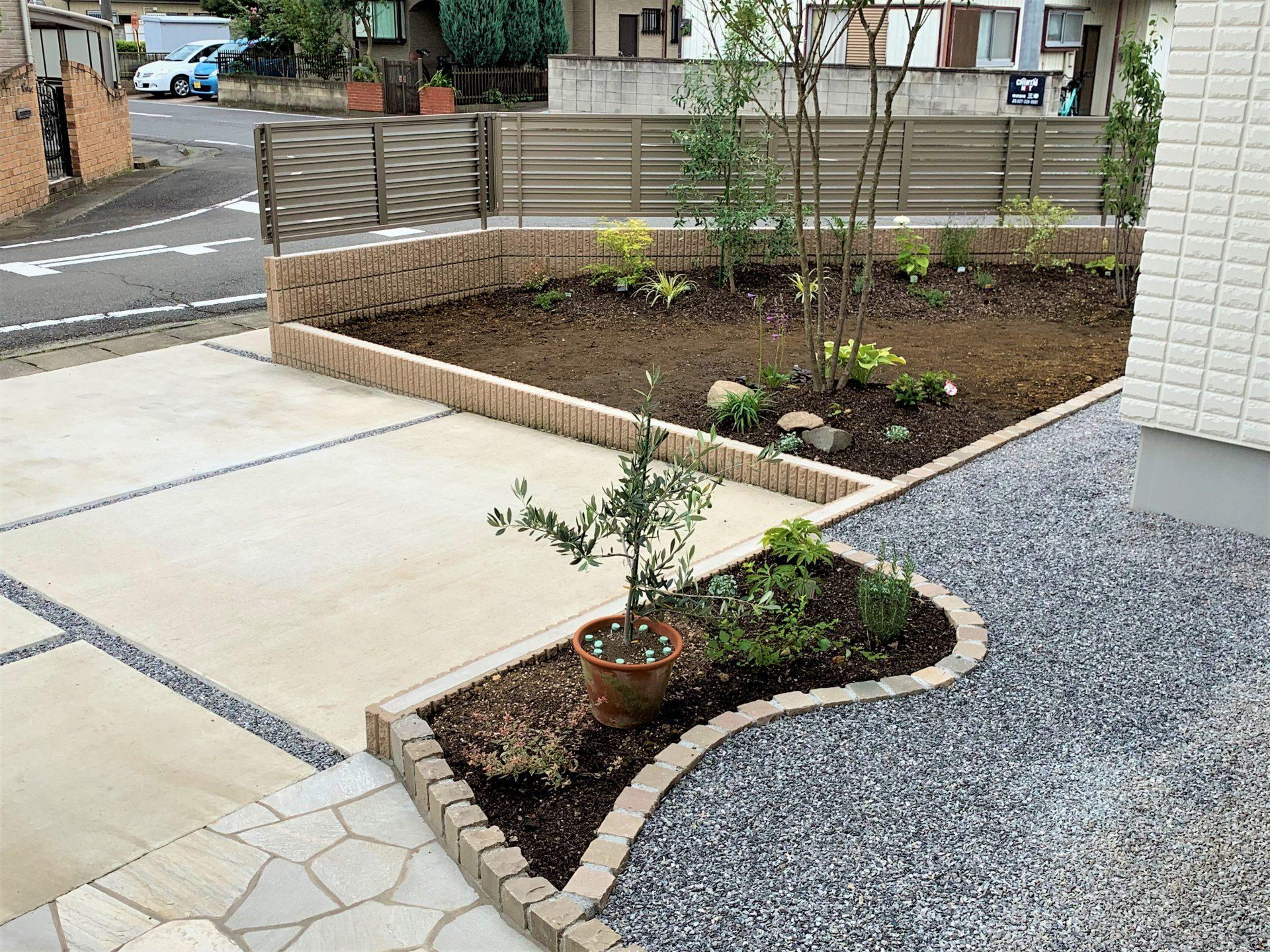 オリーブの鉢植えとピンコロの花壇