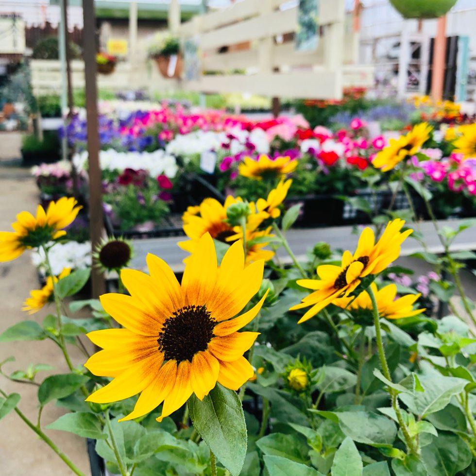 フラワーショップ季節の花
